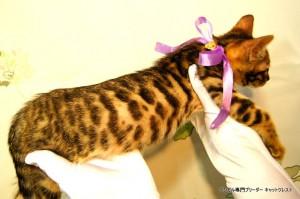 ベンガル子猫46番フルートちゃん041504