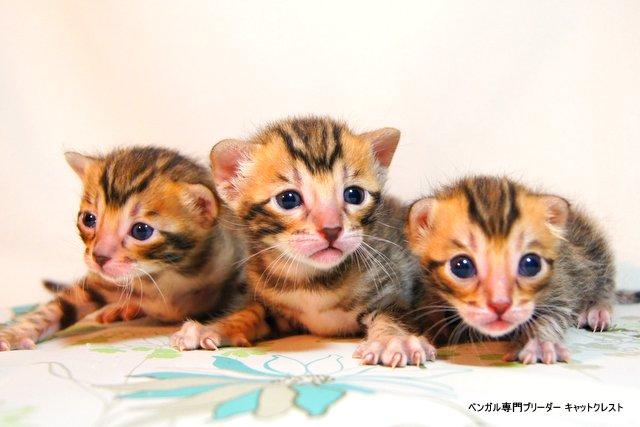 生後16日の子猫