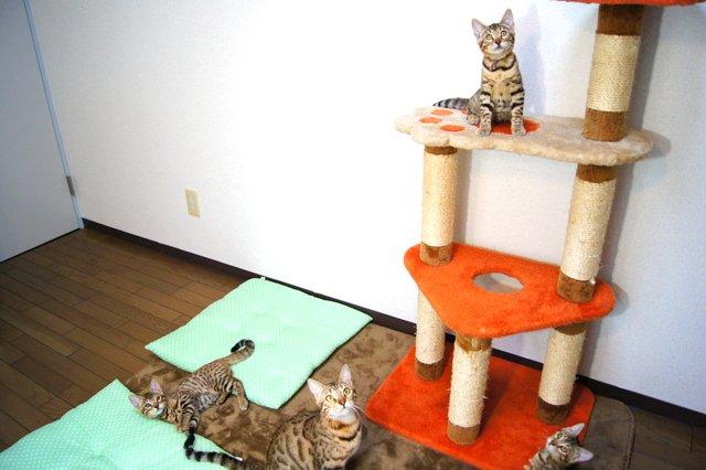 子猫 教育係