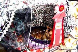 ベンガル猫ズンバ3