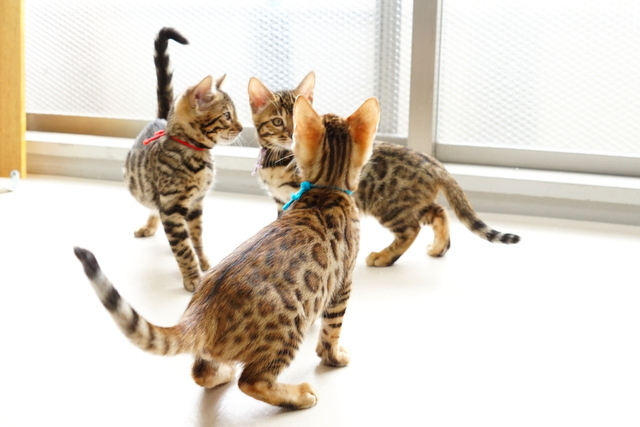 3匹の兄弟猫