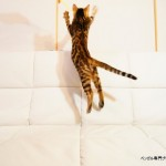 子猫のジャンプ