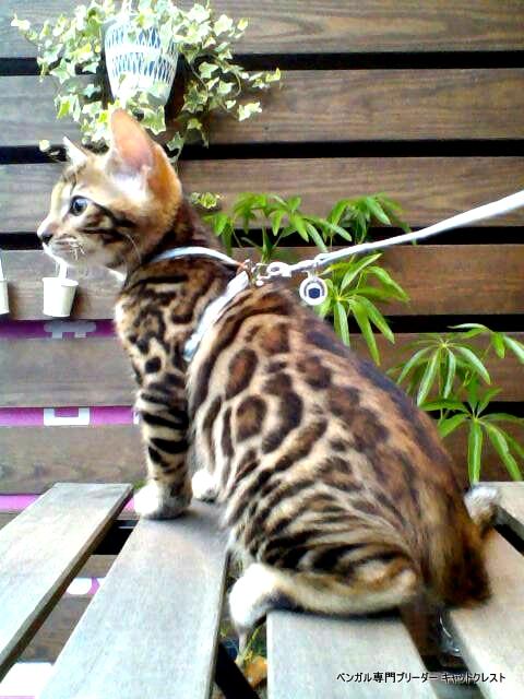 猫カフェお散歩写真