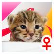 ベンガル子猫 11番ローズ20120216-0