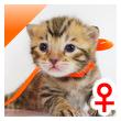 ベンガル子猫 12番オレンジ20120216-0