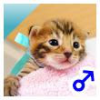 ベンガル子猫 13番アクア20120216-0