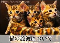 子猫の譲渡・オーナー募集について