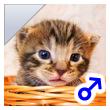 ベンガル子猫 21番しろくん