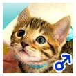 ベンガル猫の子猫11-0020-4