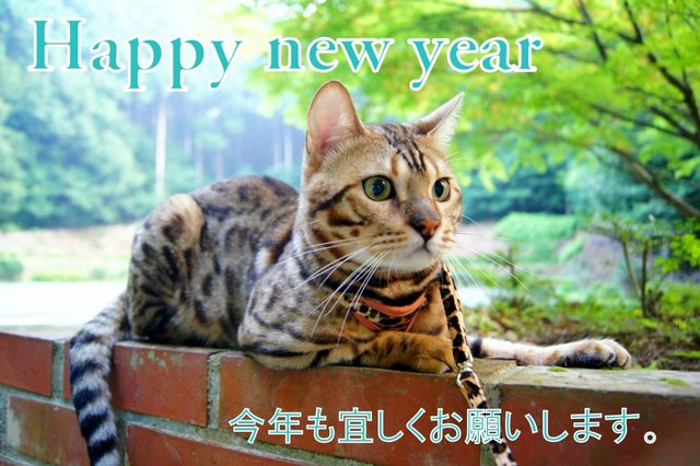 Happy New Year bengal cat