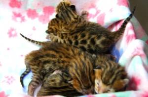 11月生まれの子猫たち