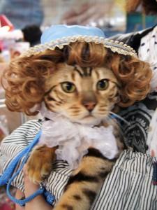 猫の衣装屋さんで試着