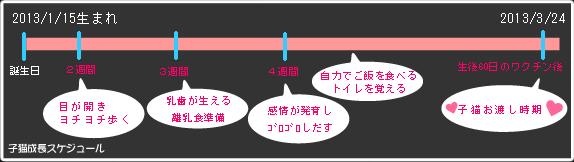 2013年1月15日生子猫お渡しスケジュール