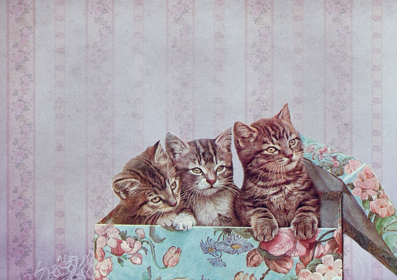 保護猫 ベンガル