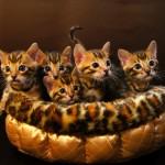 3月27日生まれの子猫たち