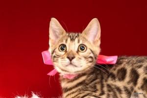 2015年9月11日生まれ 192番ピンクちゃん