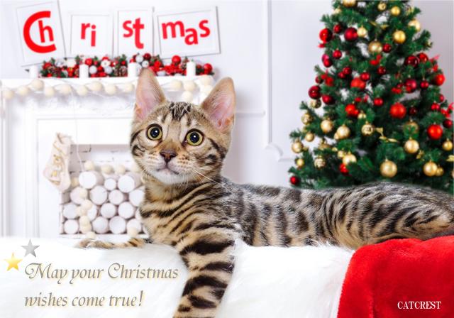 クリスマス bengal