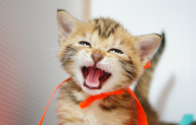 歯が生えました!