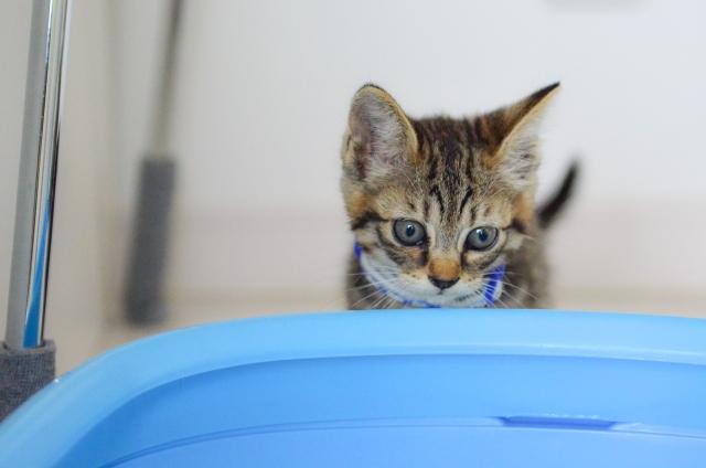 トイレ 猫