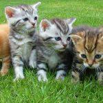 子猫 育て方 一か月