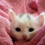 仔猫 出産