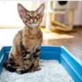 子猫 トイレ