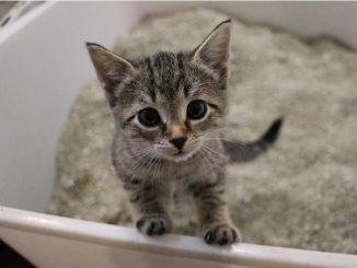 子猫 トイレ 掃除