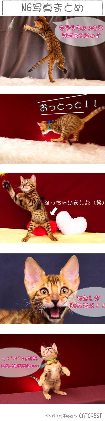 ベンガル猫NG写真まとめ