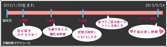 2013年1月20日生子猫お渡しスケジュール